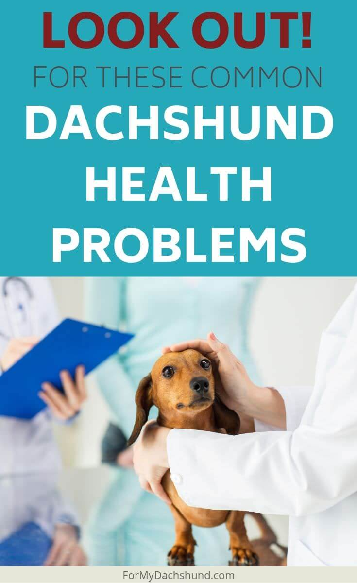 Do you have a Dachshund? You should know about common health problems to be aware of.