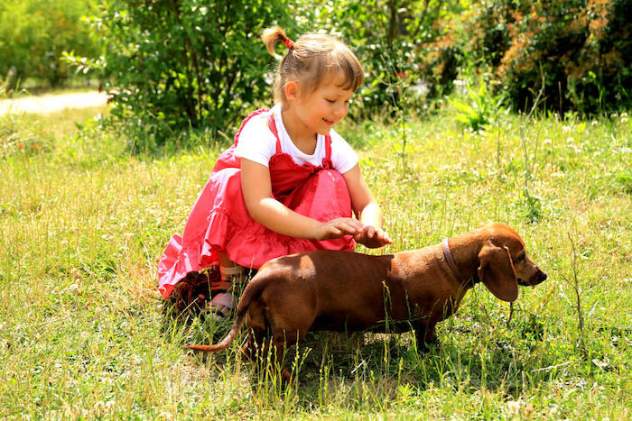 girl playing with dachshund