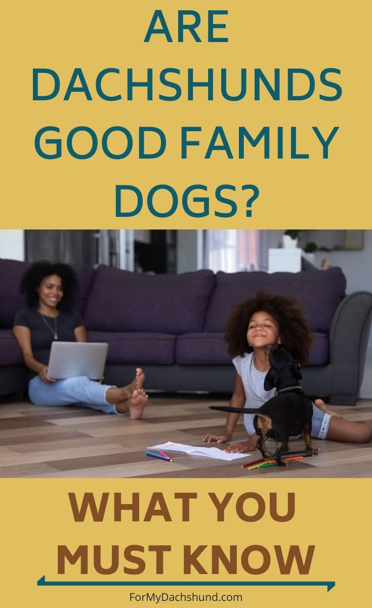 Considering getting a Dachshund? Find out if they're good family dogs.