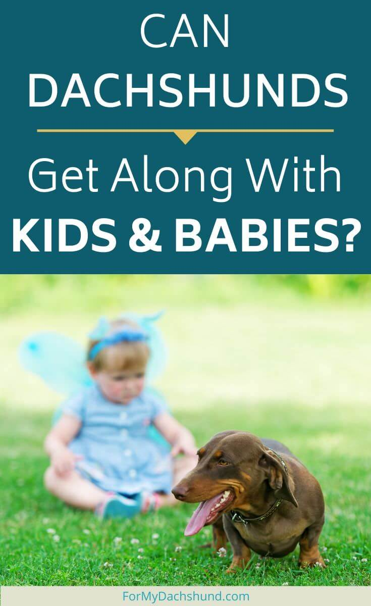 Is it possible for Dachshunds and kids to get along? Find out in this article.