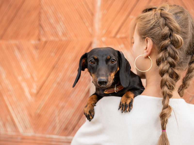 Dachshund woman
